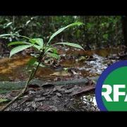 Phá rừng làm kinh tế, dự án khiến tác động đến sinh thái | © Official RFA Video